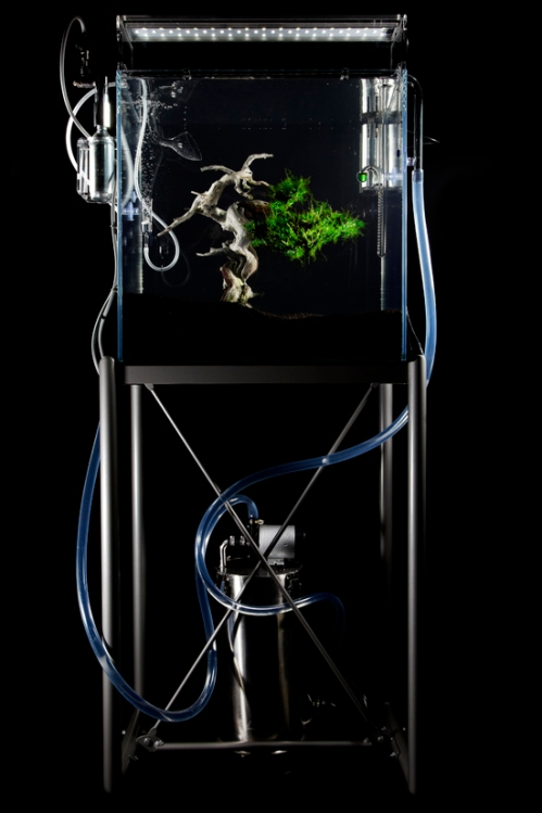 underwater-bonsai-makoto-azuma-1