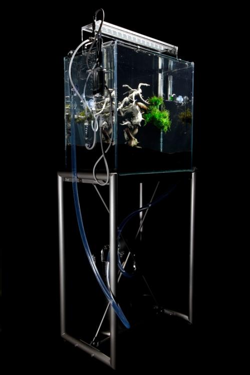 underwater-bonsai-makoto-azuma-2